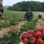 Romanii vor avea nevoie de permis de munca in Spania