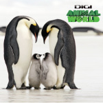 RCS-RDS lanseaza Digi Animal World
